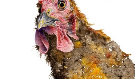 Chicken Hen Rooster Cockerel